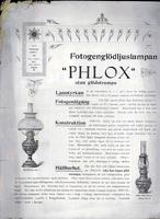 Phlox.jpg